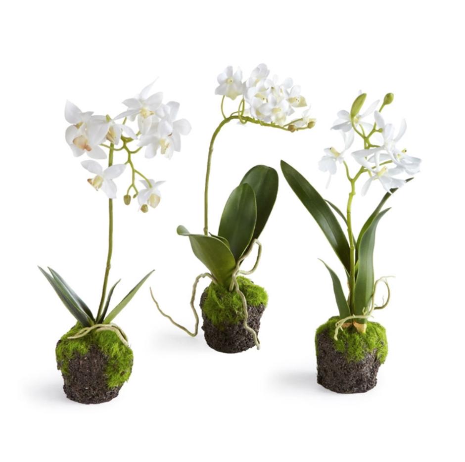 Orchid Drop Ins