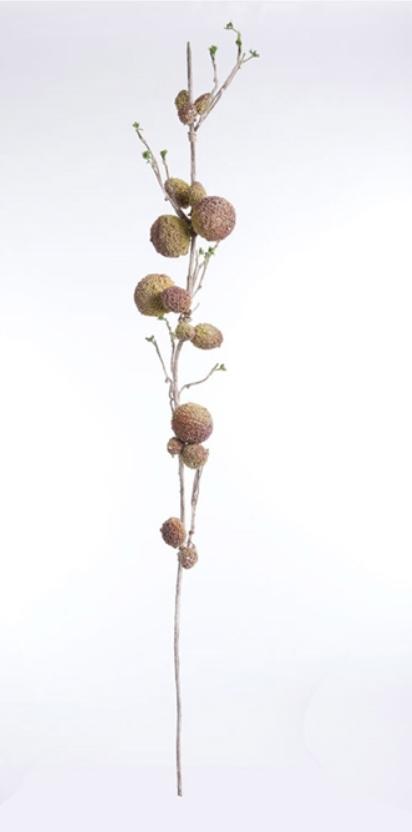 Salak Branch