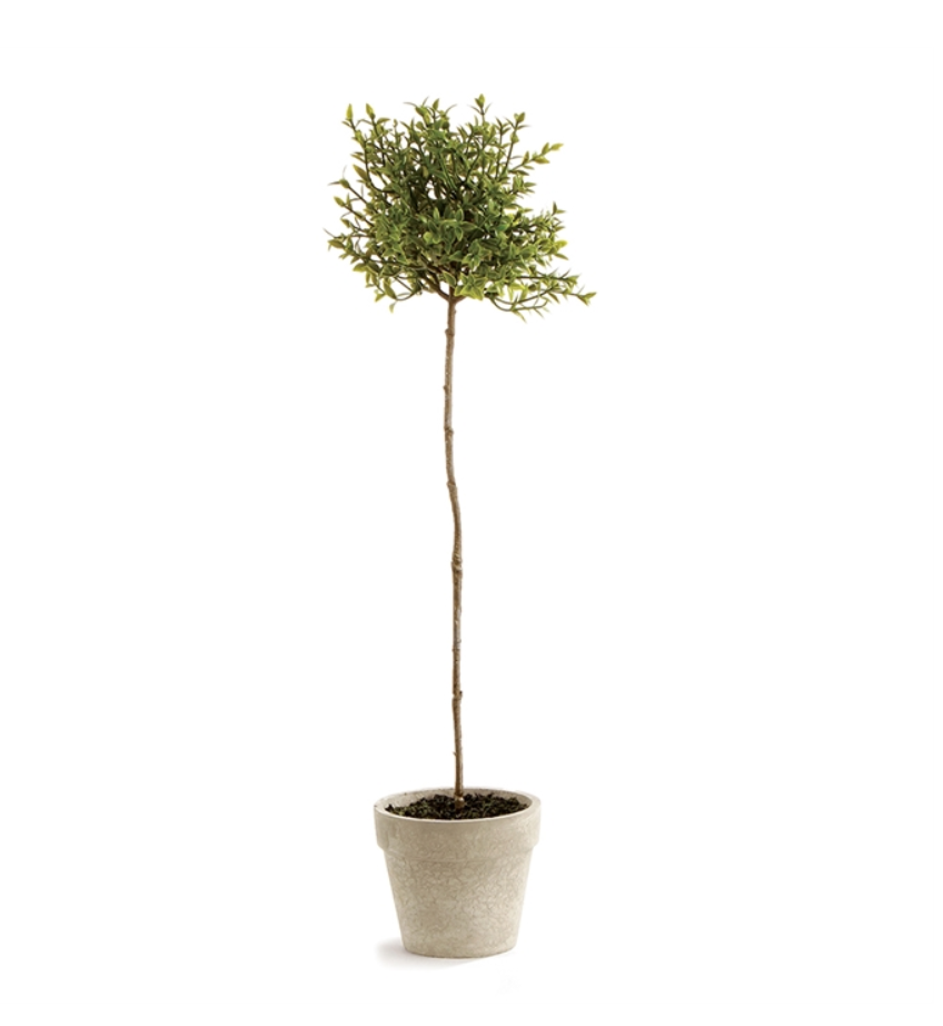 """Thyme Topiary 16"""""""