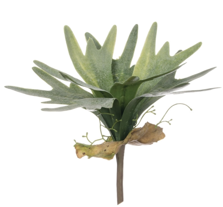 Staghorn Fern Spray