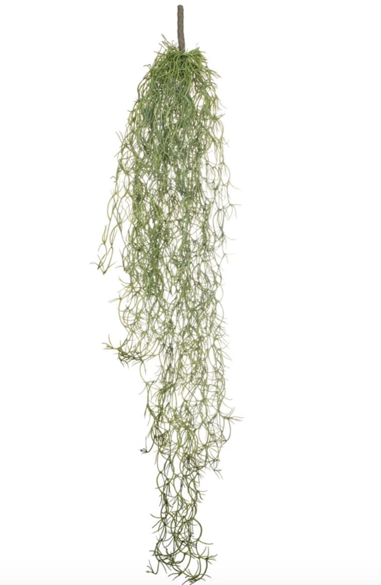 Spanish Moss Bush