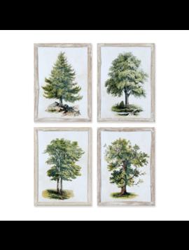 Tree Study Wall Art