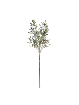 Olive Branches 43""
