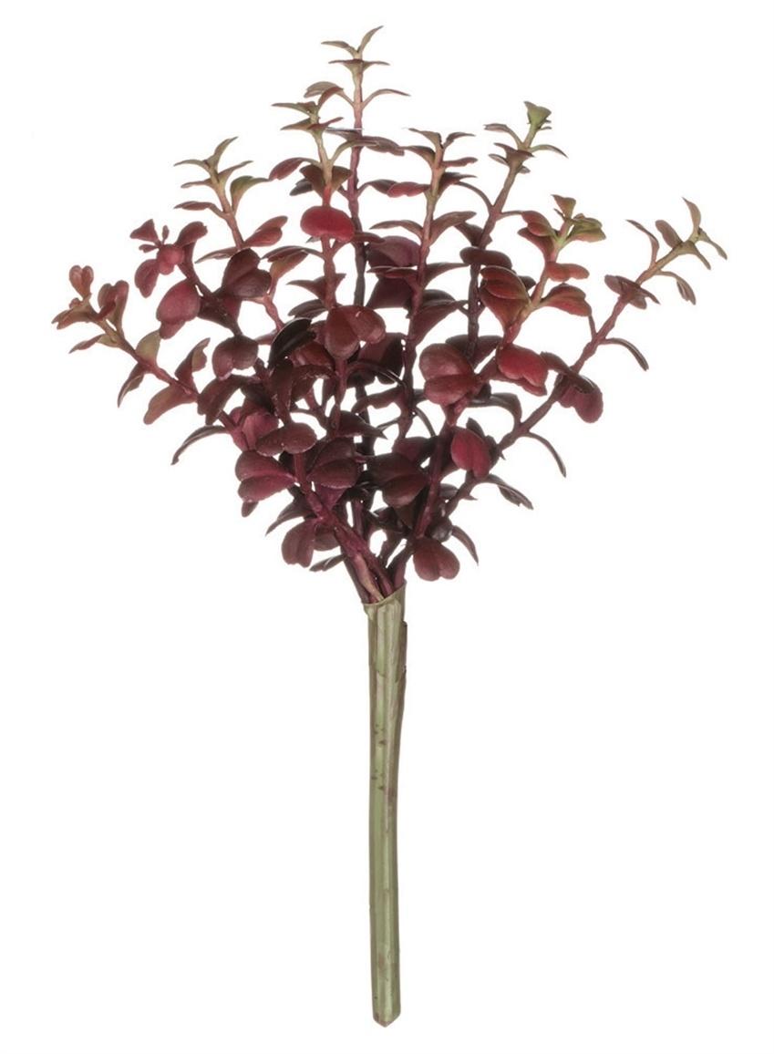 Burgundy Succulent