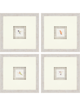 Paragon Hummingbirds
