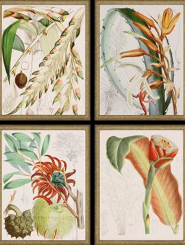 Paragon Tropical Variety