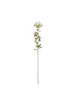 Queen Anne's Lace Stem