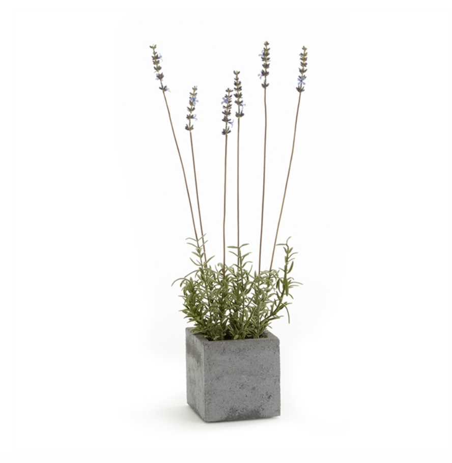 French Lavender Square Pot 19""