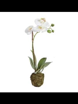 """15"""" Phalaenopsis Drop-In"""