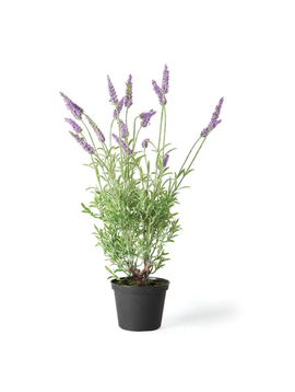 """French Lavender 18"""" Drop In"""