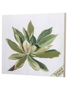 Propac Images Succulents I