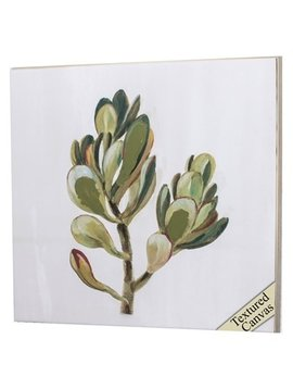 Propac Images Succulents II
