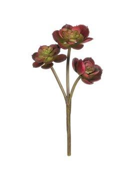 """5"""" Succulent"""