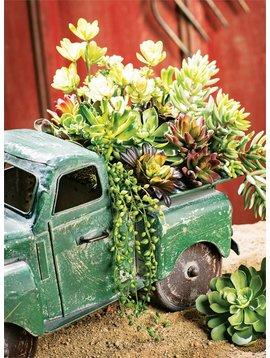 """4"""" Succulent"""