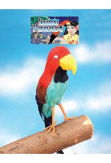 Buccaneer Parrot