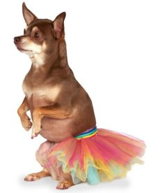 Rubies Costumes Pet Tutu (Rainbow): Pet Costume