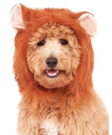 Rubies Costumes Lion's Mane: Pet Costume