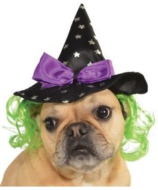 Rubies Costumes Witch Pet Hat w/ Hair: Pet Costume