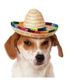 Rubies Costumes Multicolor Pet Sombrero