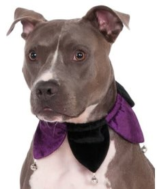 Rubies Costumes Velvet Jester Collar: Pet Costume