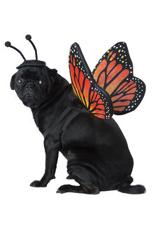 California Costumes Monarch Butterfly: Pet Costume