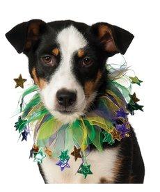 Rubies Costumes Mardi Gras: Fancy Pet Collar