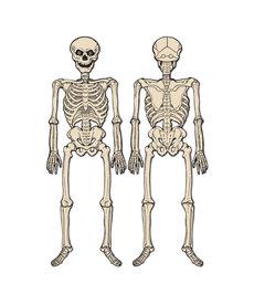 """Vintage Halloween: Jointed Skeleton (4'3"""")"""