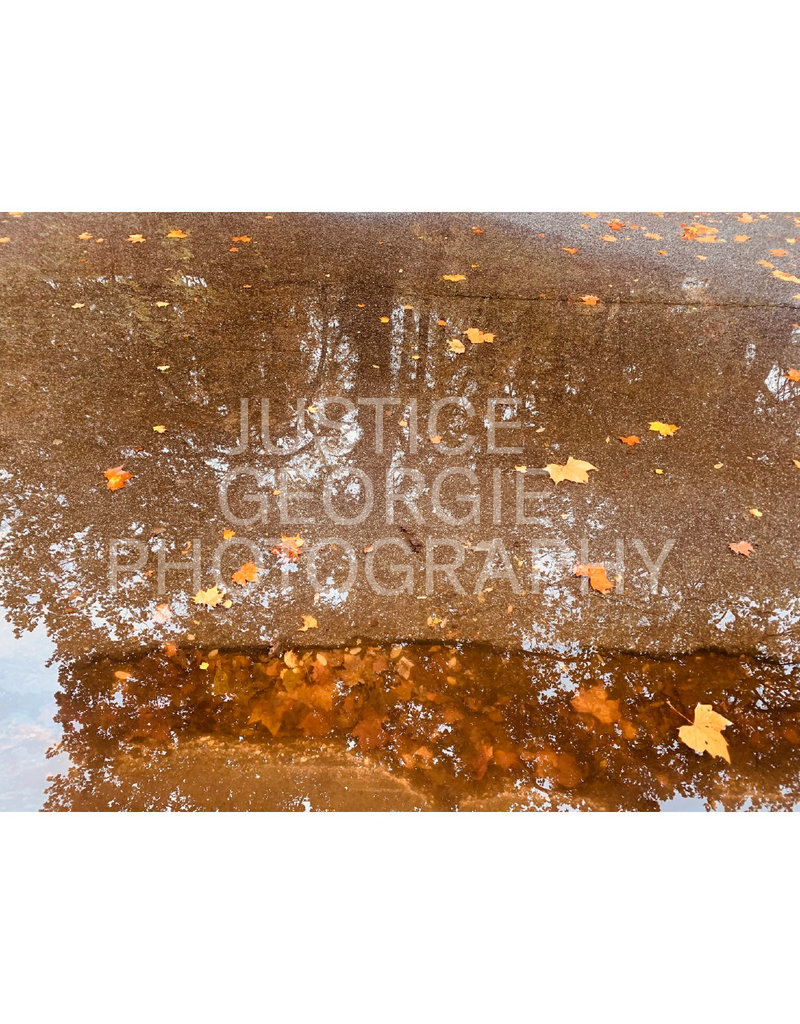 "Justice Georgie Photography ""Tree Reflection"" Print"
