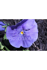 "Justice Georgie Photography ""Inside-Out Sun"" Print"