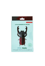Studio Roof Wall Deco, Small, Stag Beetle