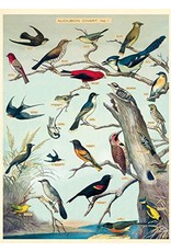 Cavallini Wrap Sheet Audubon Birds