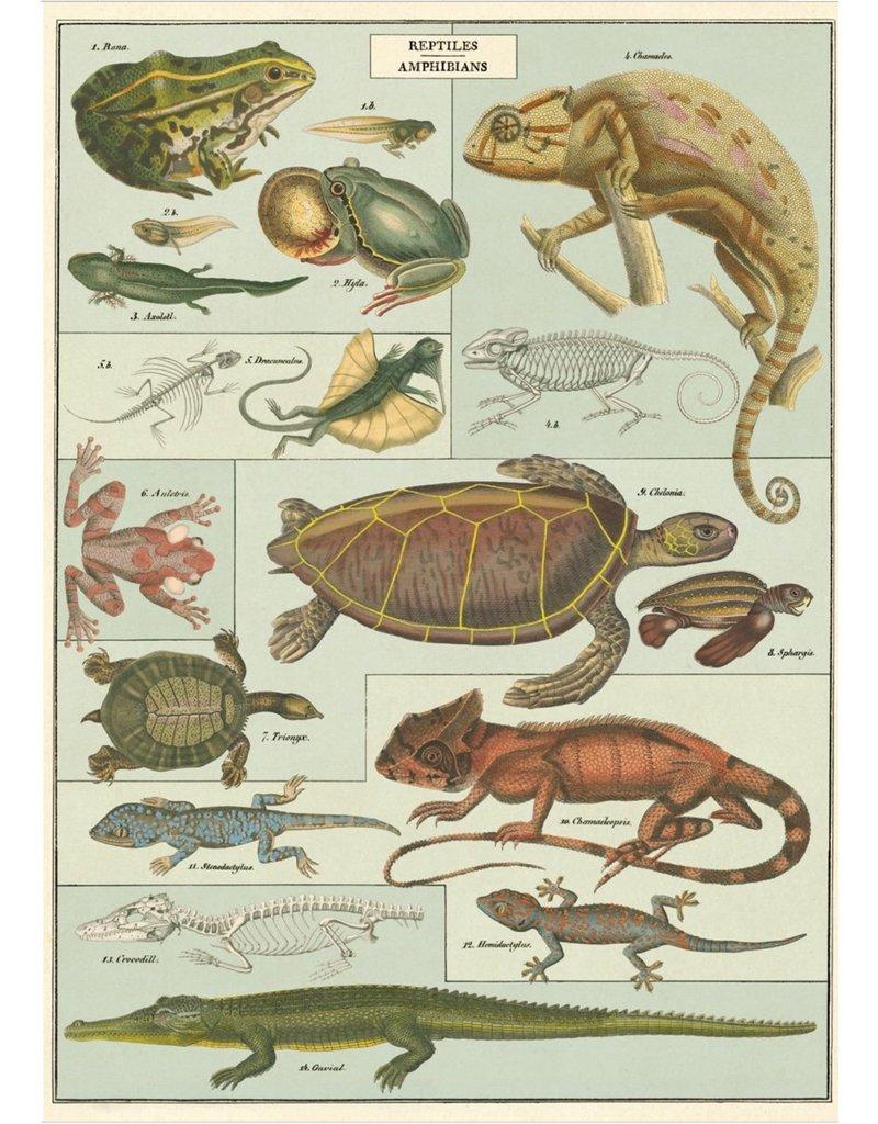 Cavallini Wrap Sheet Reptiles & Amphibians