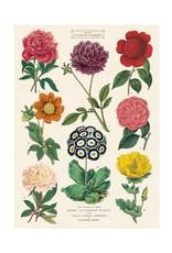 Cavallini Wrap Sheet Botanica 2