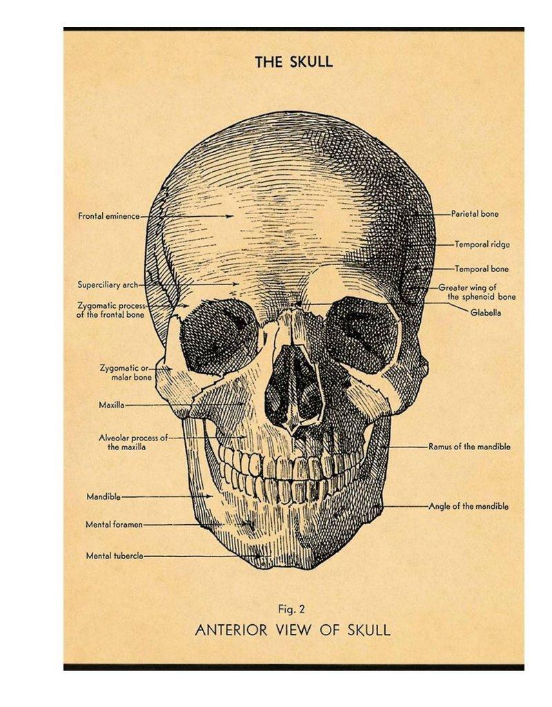 Cavallini Wrap Sheet The Skull