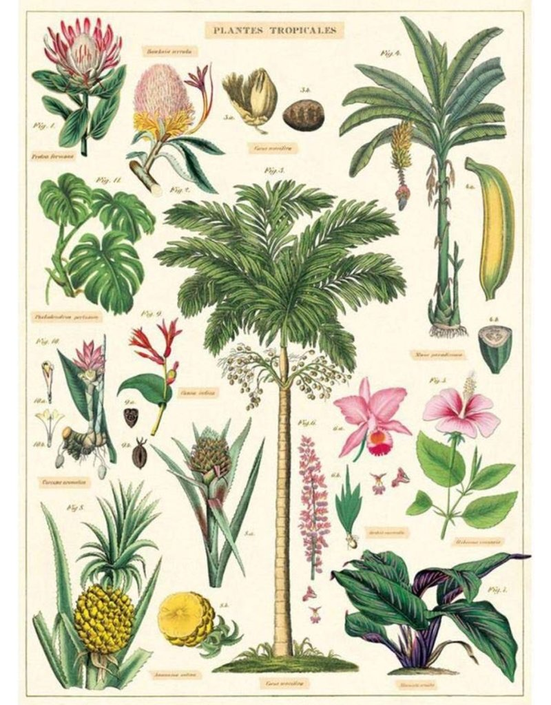 Cavallini Wrap Sheet Tropical Plants