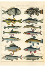 Cavallini Wrap Sheet Natural History Fish