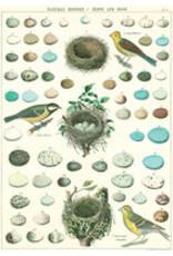 Cavallini Wrap Sheet Nest, Eggs & Birds