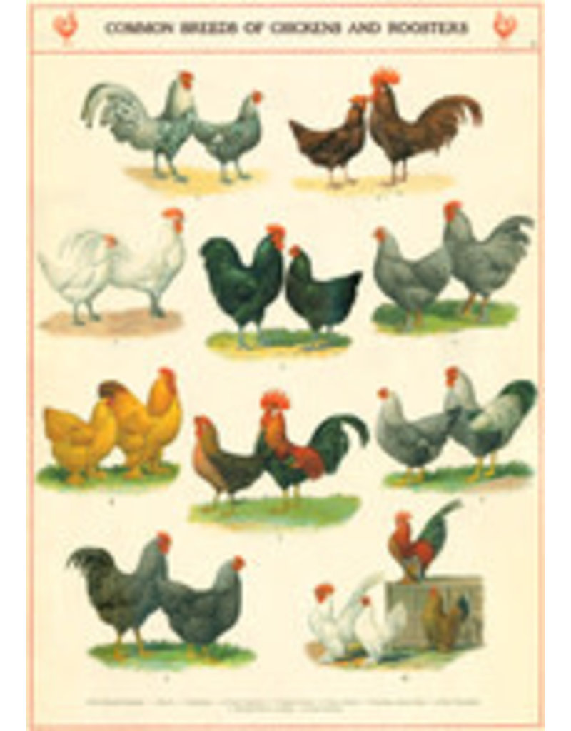 Cavallini Wrap Sheet Chicken & Roosters
