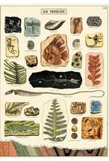Cavallini Wrap Sheet Fossils