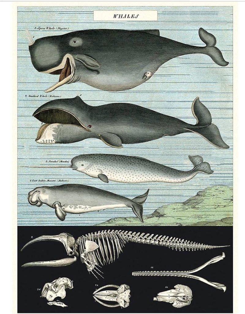 Cavallini Wrap Sheet Whale Chart