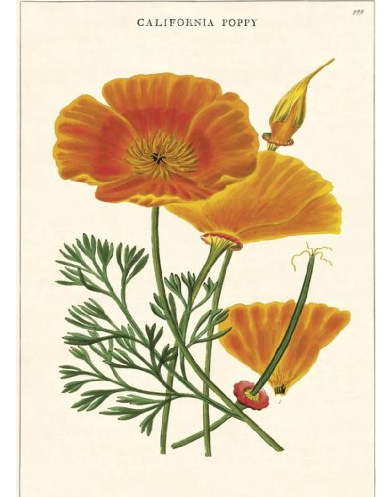 Cavallini Wrap Sheet California Poppy