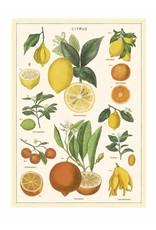 Cavallini Wrap Sheet Citrus