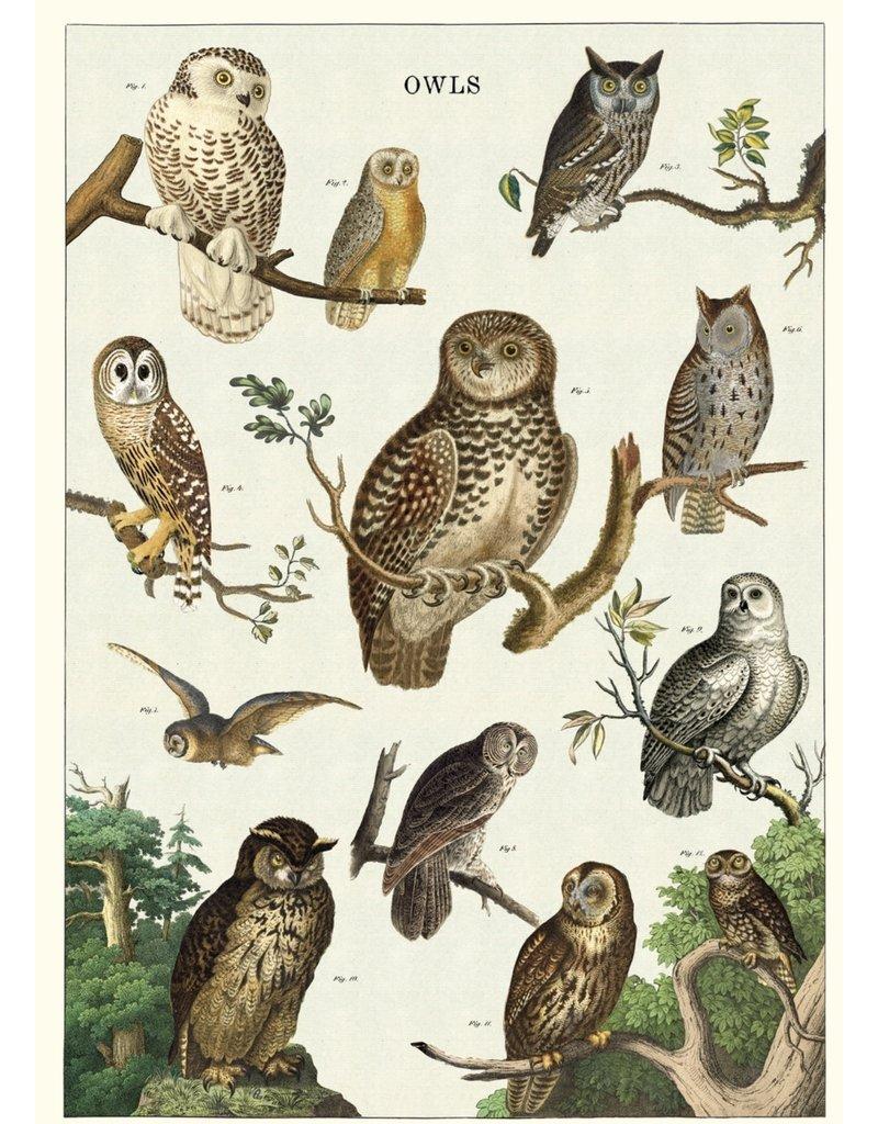 Cavallini Wrap Sheet Owl Chart