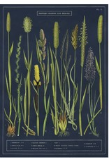 Cavallini Wrap Sheet Grasses & Sedges