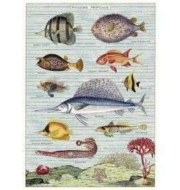 Cavallini Wrap Sheet Tropical Fish