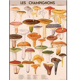 Cavallini Wrap Sheet Mushrooms
