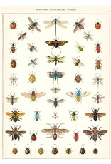 Cavallini Wrap Sheet Natural History Insects