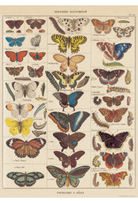 Cavallini Wrap Sheet Butterfly Natural History