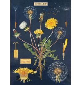 Cavallini Wrap Sheet Dandelion Chart