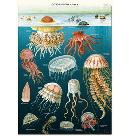 Cavallini Wrap Sheet Jellyfish Oceanography